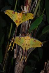 Le Carbet amazonien