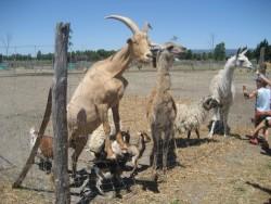 Parc Animalier de la Matarelle