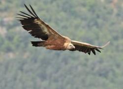 La maison des vautours