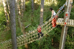 Du haut des arbres